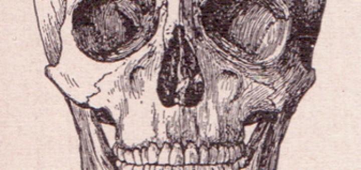 3935842631_05da0b70e5_skull