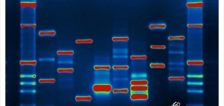 3080247531_bf04a5cbe5_DNA
