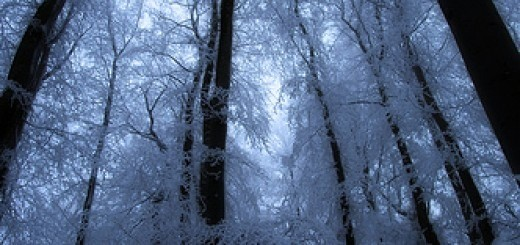 4182196753_72111511f7_winter