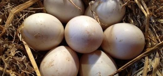 c8abec6ece7d9ba697f6c633_640_eieren