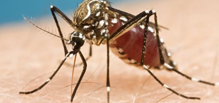24253989800_7d73da6586_Zika-virus