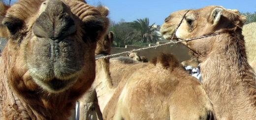 8384454106_a71063718b_Eritrea