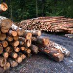 De grote bomenkap: Daar gaat weer 200.000m2, ditmaal de Bergse bossen