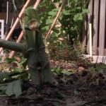 Opa en oma door politie beroofd van 2 wietplanten terwijl ze eventjes weg waren