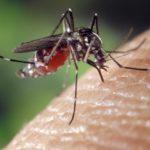 Tegelijkertijd met het coronavirus duikt nu ook het westnijlvirus op in Nederland