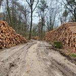 De gesubsidieerde houtstook wankelt, nu het gasverbod stoppen