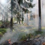 Momenteel woedt 'Nederlands grootste natuurbrand ooit' in Brabant