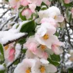 Wederom geoengineering van kou en sneeuw in Mei!