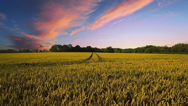 best--helft-van-alle-boeren-heeft-bijbaan-om-financieel-rond-te-komen