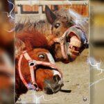 Eet smakelijk! Nederland grootste importeur van fout paardenvlees uit Argentinië
